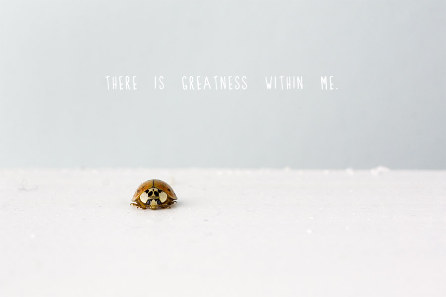 Ladybird with 'There is Greatness Within Me' quote